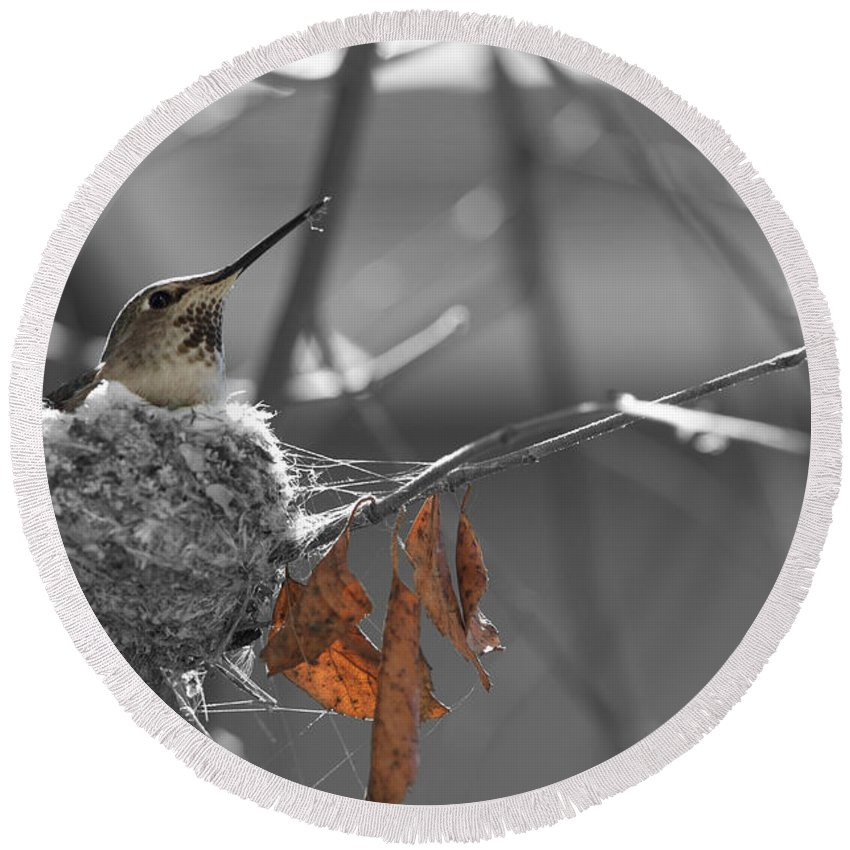 Nature Round Beach Towel featuring the photograph Mama Hummingbird by Spencer Hughes