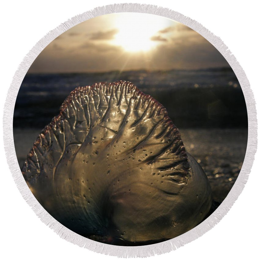 Wildlife Round Beach Towel featuring the photograph Man-o-war Sunrise II by Kimberly Mohlenhoff