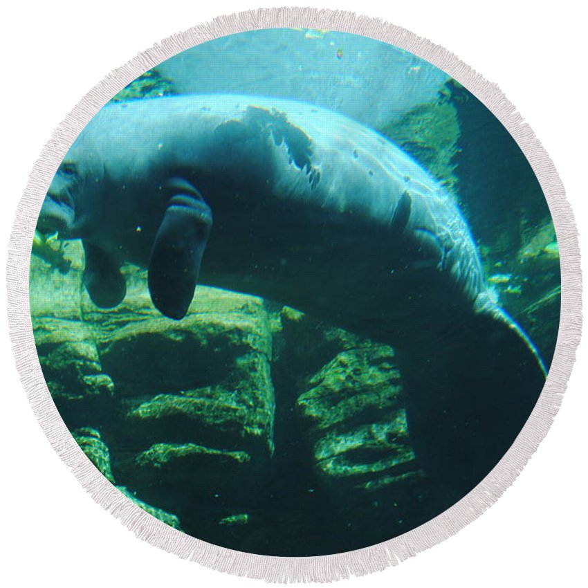 Manatee Round Beach Towel featuring the photograph Manatee by Jost Houk