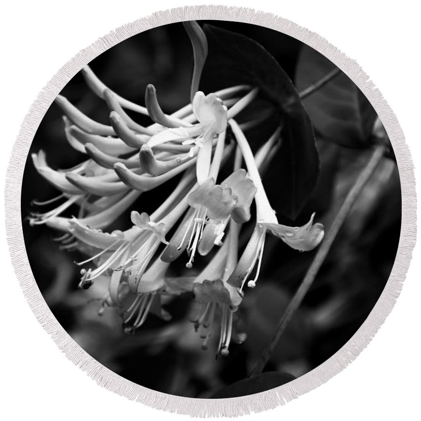 Mandarin Honeysuckle Vine Round Beach Towel featuring the photograph Mandarin Honeysuckle Vine 1 Black And White by Marina McLain