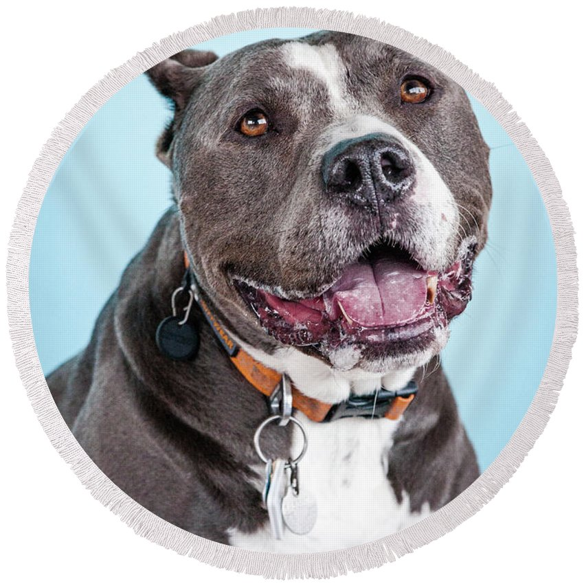 Dog Round Beach Towel featuring the photograph Manny 2 by Pit Bull Headshots by Headshots Melrose