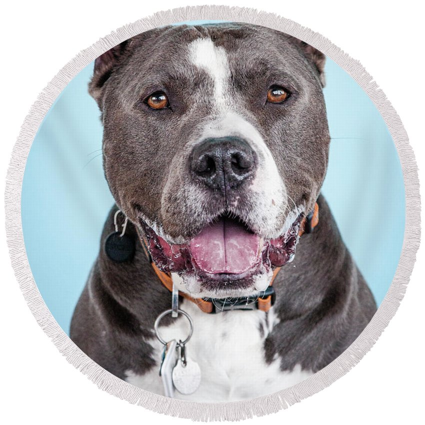 Dog Round Beach Towel featuring the photograph Manny 3 by Pit Bull Headshots by Headshots Melrose