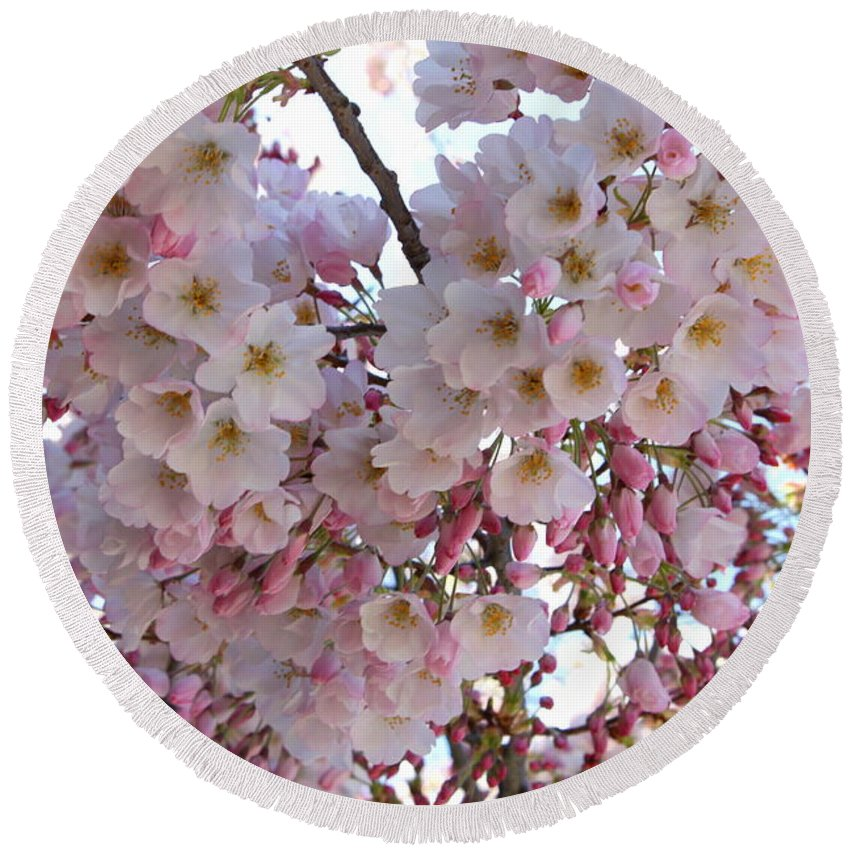 Pink Blossoms Round Beach Towel featuring the photograph Many Pink Blossoms by Carol Groenen