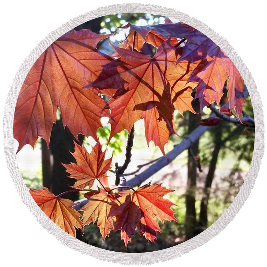 Maple Tree Round Beach Towel featuring the photograph Maple by Aurora Bautista