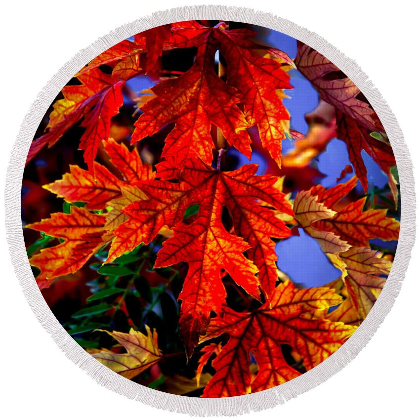 Maple Round Beach Towel featuring the photograph Maple Leaves by Robert Bales