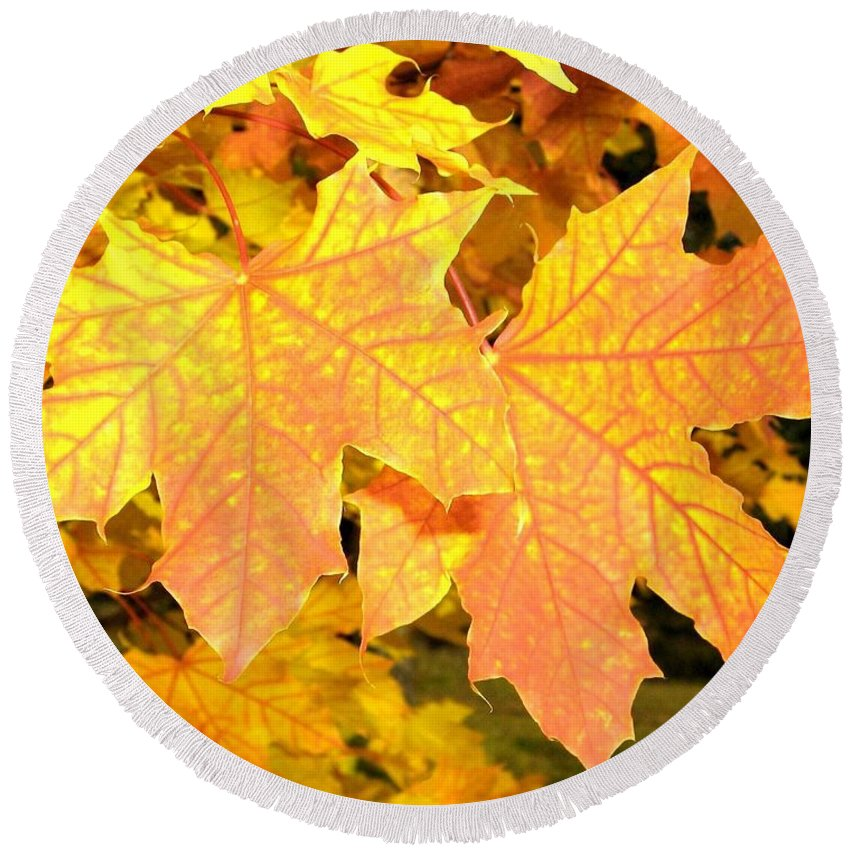 Autumn Round Beach Towel featuring the photograph Maple Mania 2 by Will Borden