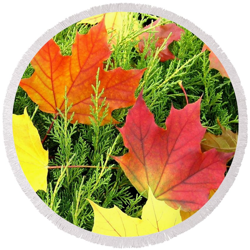 Autumn Round Beach Towel featuring the photograph Maple Mania 5 by Will Borden