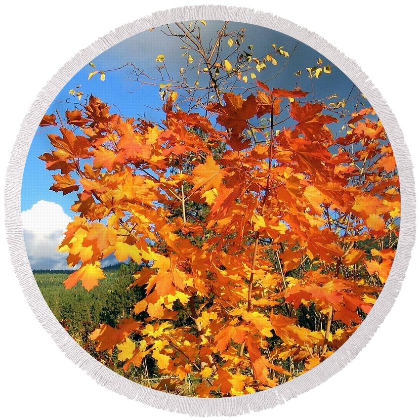 Autumn Round Beach Towel featuring the photograph Maple Mania 8 by Will Borden