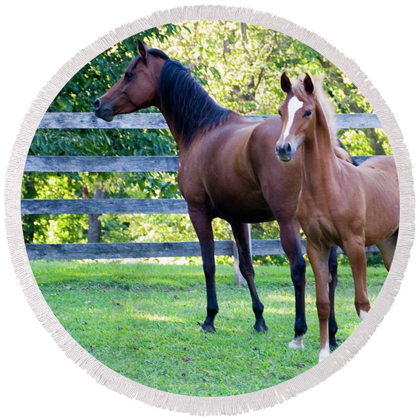 Horse Round Beach Towel featuring the photograph Mare And Colt by Michael Barry
