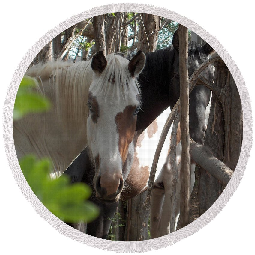 Horses Herd Mares Trees Ranch Farm Acreage Round Beach Towel featuring the photograph Mares In Trees by Andrea Lawrence