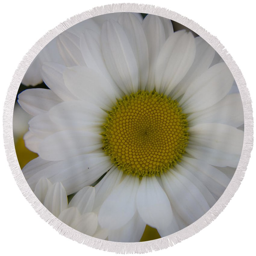 Marguerite Round Beach Towel featuring the photograph Marguerite Daisies by Teresa Mucha