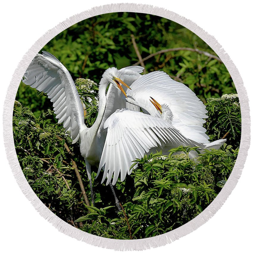 Great Egrets Round Beach Towel featuring the photograph Marital Bliss by Dennis Goodman