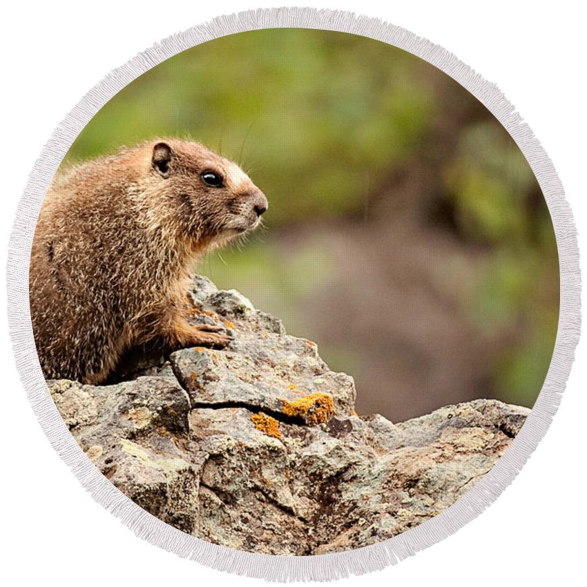 Colorado Round Beach Towel featuring the photograph Marmot by Lana Trussell