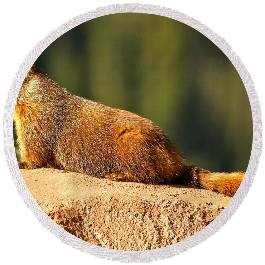 Yellow Bellied Marmot Round Beach Towel featuring the photograph Marmot Life by Adam Jewell