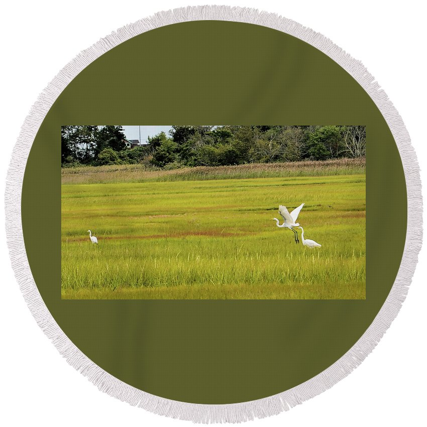 Egrets Round Beach Towel featuring the photograph Marsh Egrets by Melissa Hicks