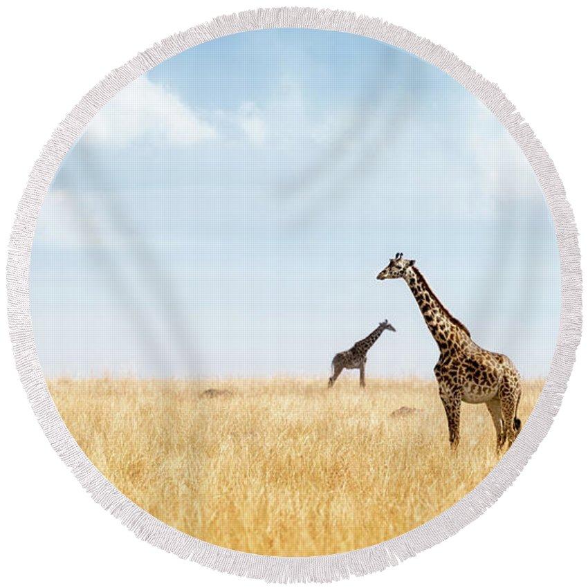 Giraffe Round Beach Towel featuring the photograph Masai Giraffe In Kenya Plains by Susan Schmitz