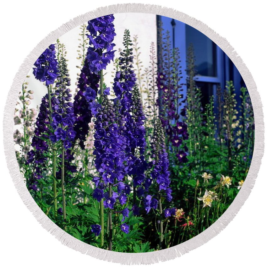 Columbine Round Beach Towel featuring the photograph Matching Flowers And Window by Sally Weigand