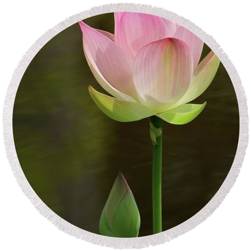 Lotus Round Beach Towel featuring the photograph Pink Lotus And A Bud by Sabrina L Ryan