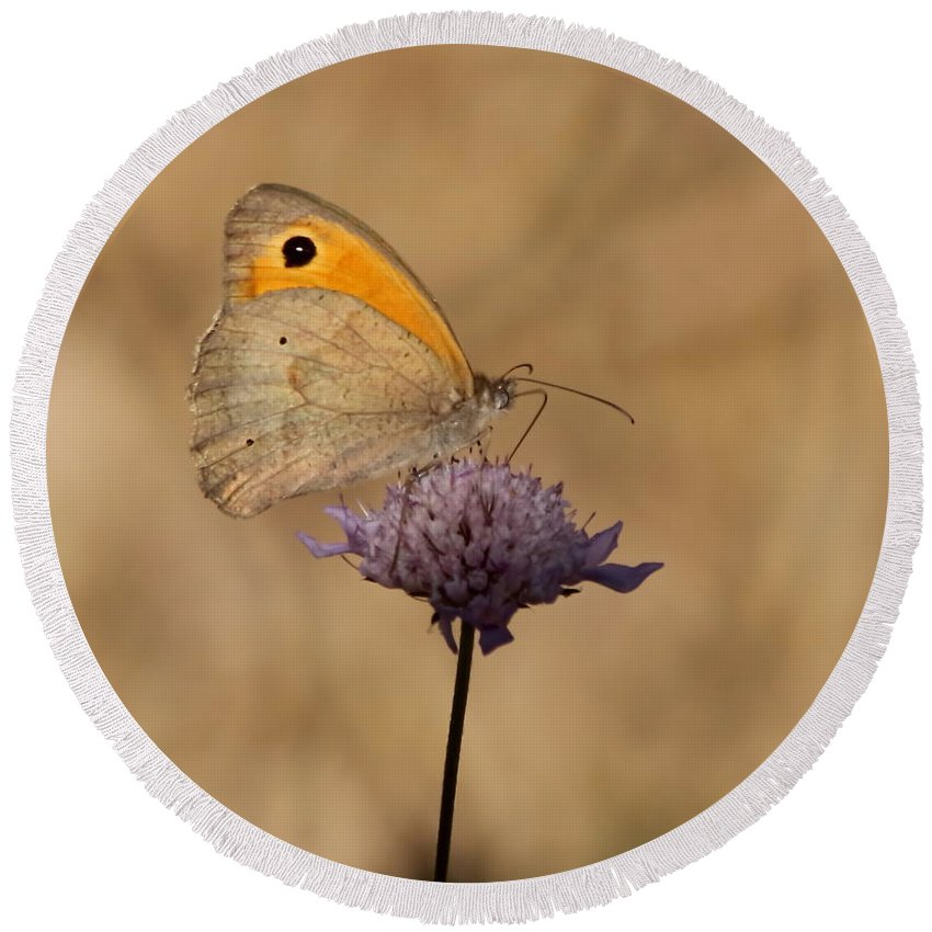 Butterfly Round Beach Towel featuring the photograph Meadow Brown Butterfly by Jeff Townsend