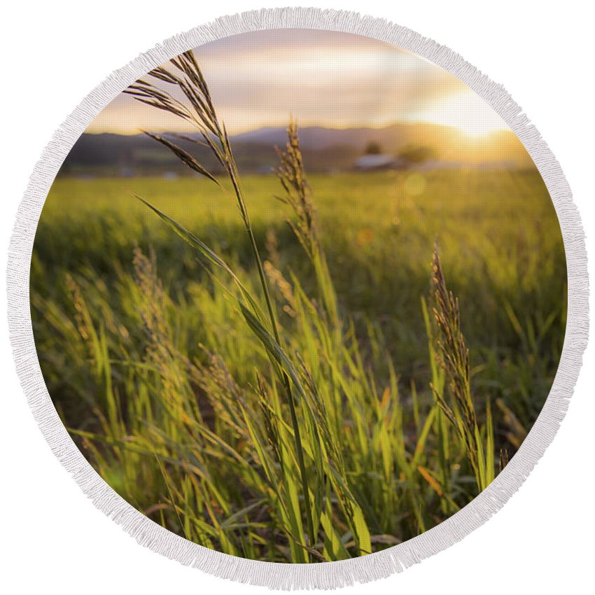 Meadow Light Round Beach Towel featuring the photograph Meadow Light by Chad Dutson