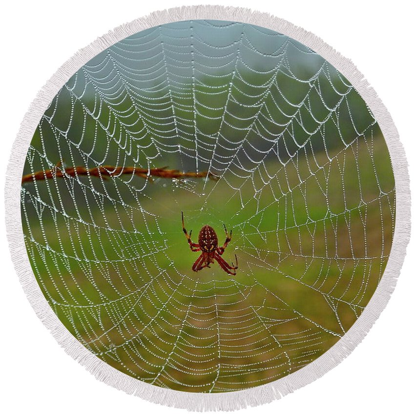 Spider Round Beach Towel featuring the photograph Meadow Macrame by Diana Hatcher