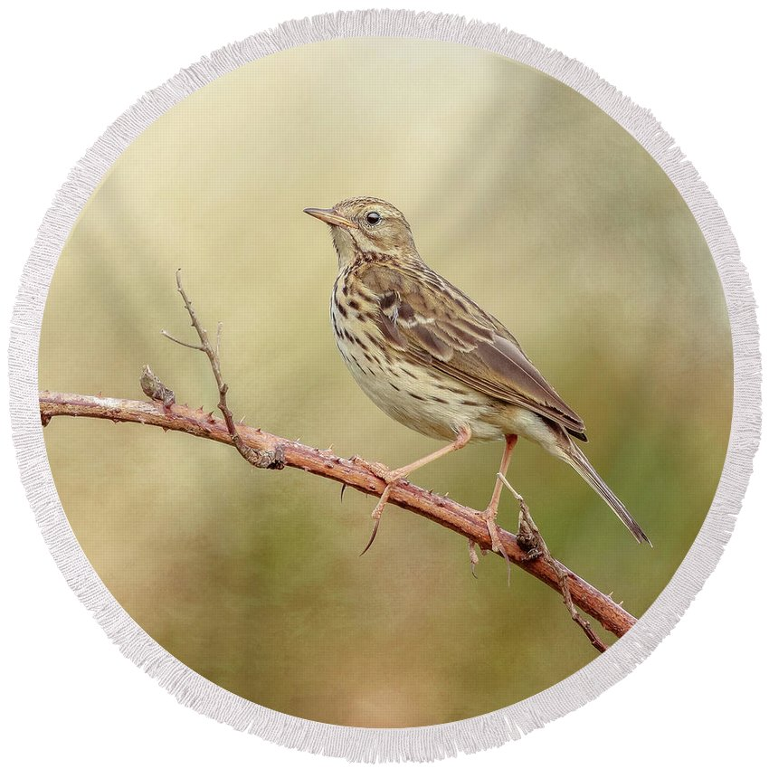 Meadow Pipit Round Beach Towel featuring the photograph Meadow Pipit by Roy McPeak