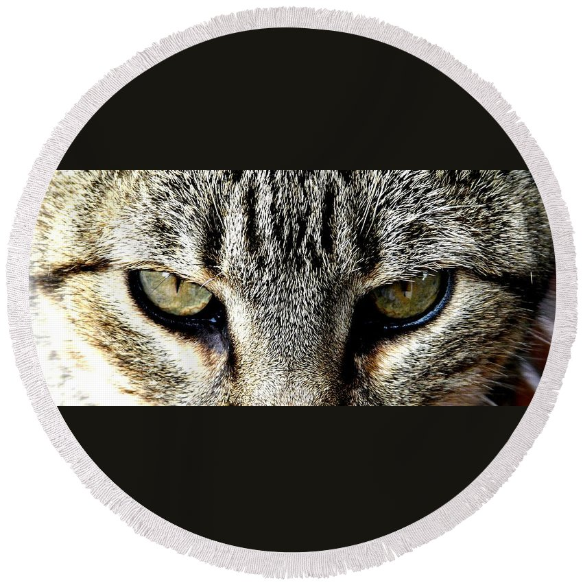 Cat Round Beach Towel featuring the photograph Me...dangerous...never. by Valerie Ornstein