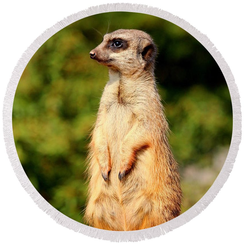 Meerkat Round Beach Towel featuring the photograph Meerkat by Heike Hultsch