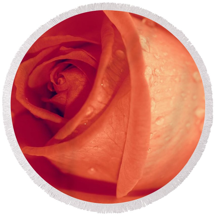 Rose Round Beach Towel featuring the photograph Mellow by Clare Bevan