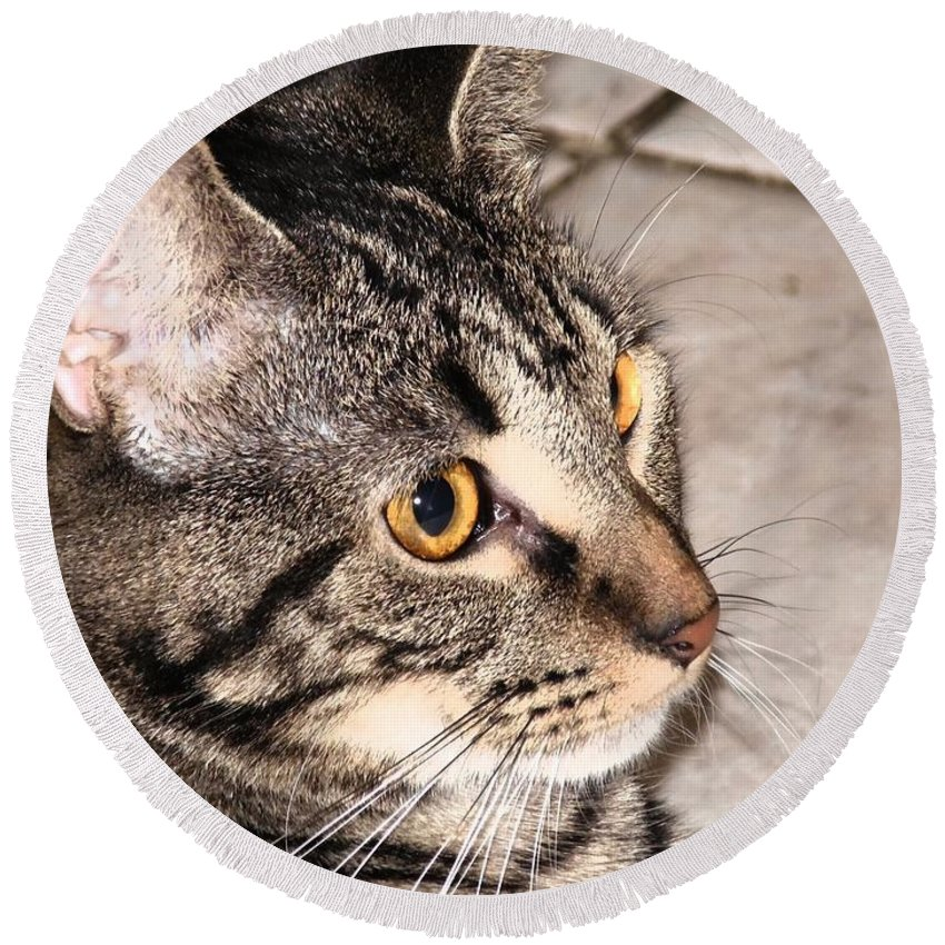 Cat Round Beach Towel featuring the photograph Melvin The Wondercat by Paulo Guimaraes