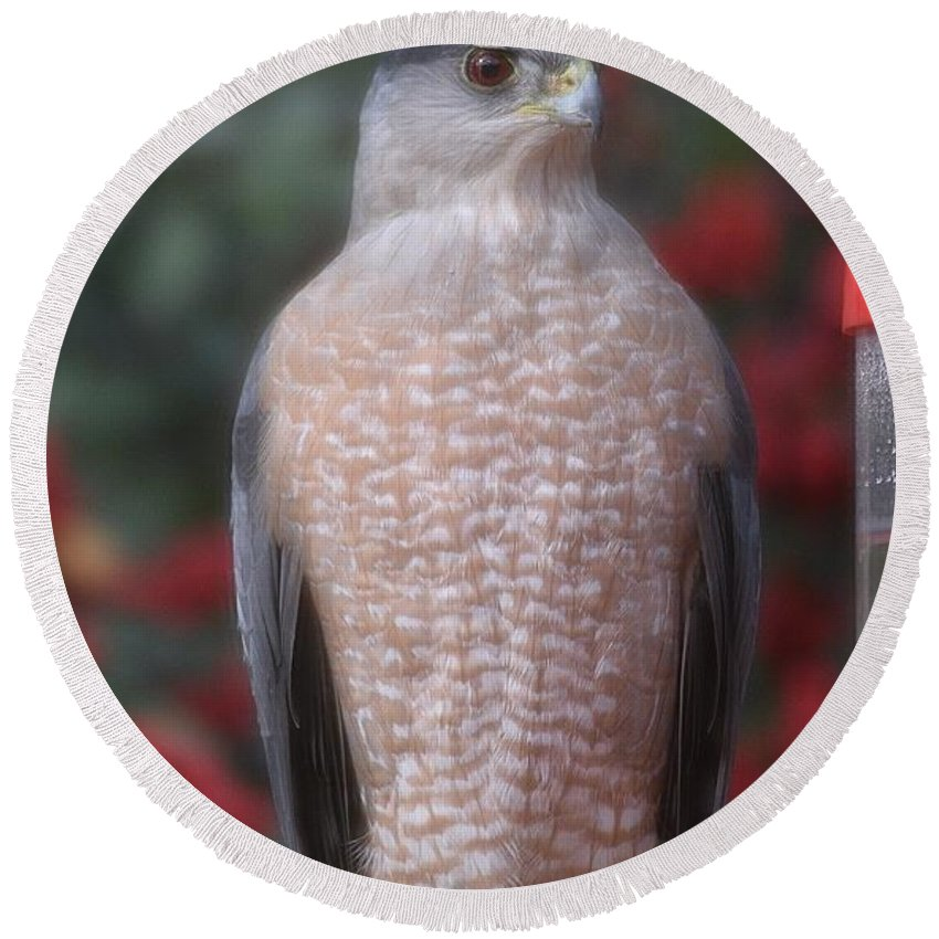 Linda Brody Round Beach Towel featuring the photograph Coopers Hawk I by Linda Brody