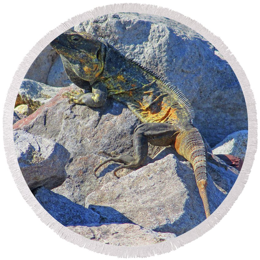 Mexican Iguana Round Beach Towel featuring the photograph Mexican Iguana by Randall Weidner