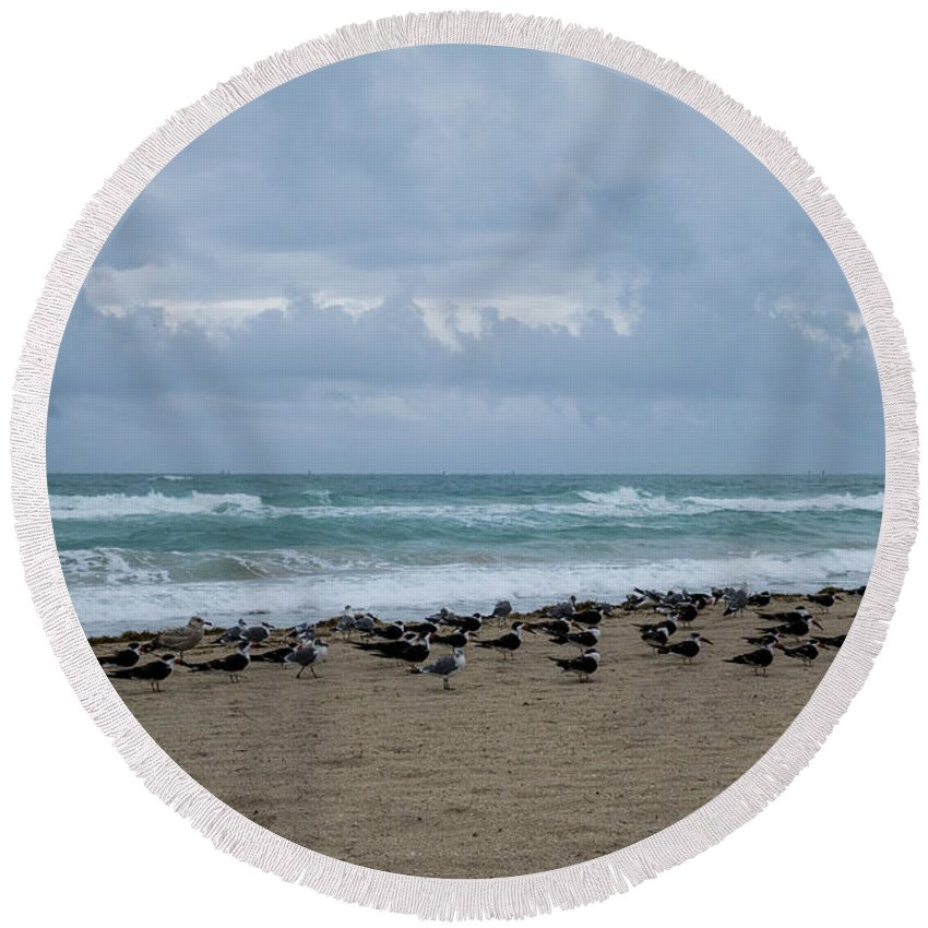 Miami Round Beach Towel featuring the photograph Miami Beach Flock Of Birds by Toby McGuire