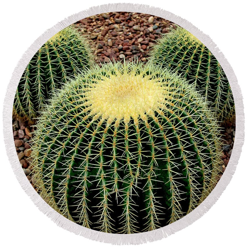 Cacti Round Beach Towel featuring the photograph Mickey Mouse Barrel Cactus by Donna Haggerty