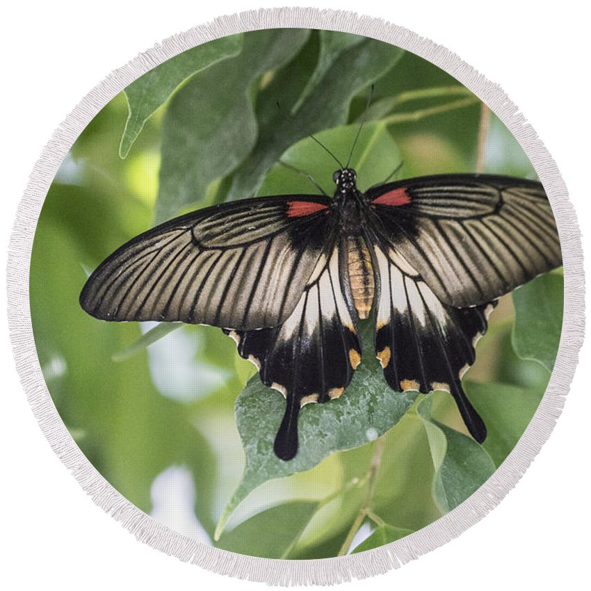 Moth Round Beach Towel featuring the photograph Midland Moth by Joseph Yarbrough