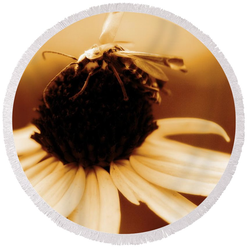 Black Eyed Susan Round Beach Towel featuring the photograph Mimic by Angela Rath