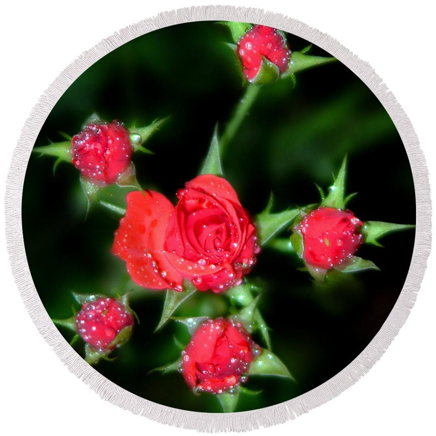Roses Round Beach Towel featuring the photograph Mini Roses by Anthony Jones
