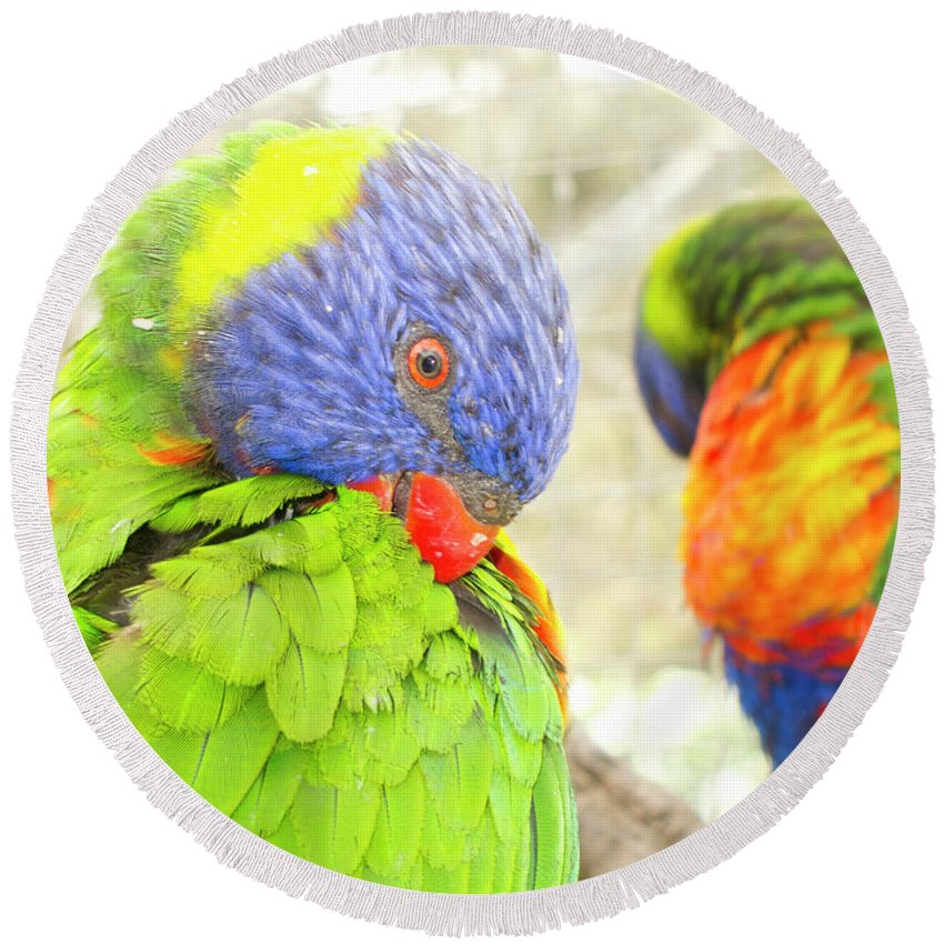 Rainbow Lorikeet Round Beach Towel featuring the photograph Mirror Image by Douglas Barnard