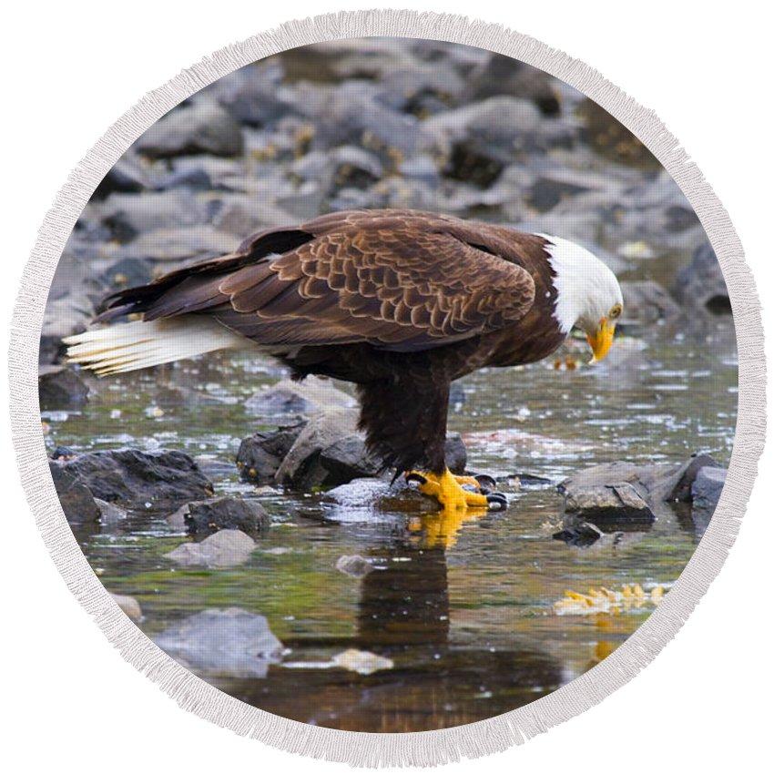Eagle Round Beach Towel featuring the photograph Mirror Mirror by Mike Dawson