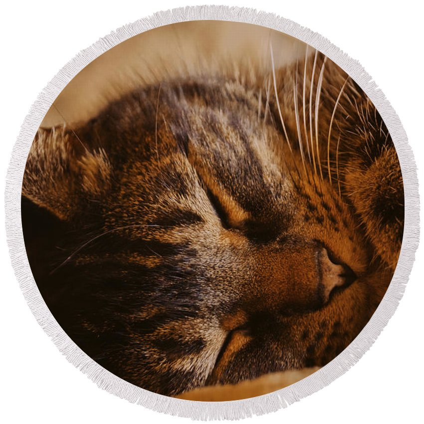 Cat Round Beach Towel featuring the photograph Mischief-free by Joe Geraci