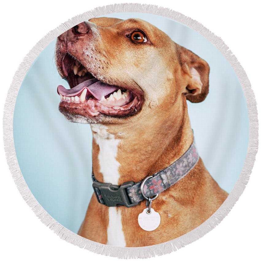 Dog Round Beach Towel featuring the photograph Mishka 2 by Pit Bull Headshots by Headshots Melrose