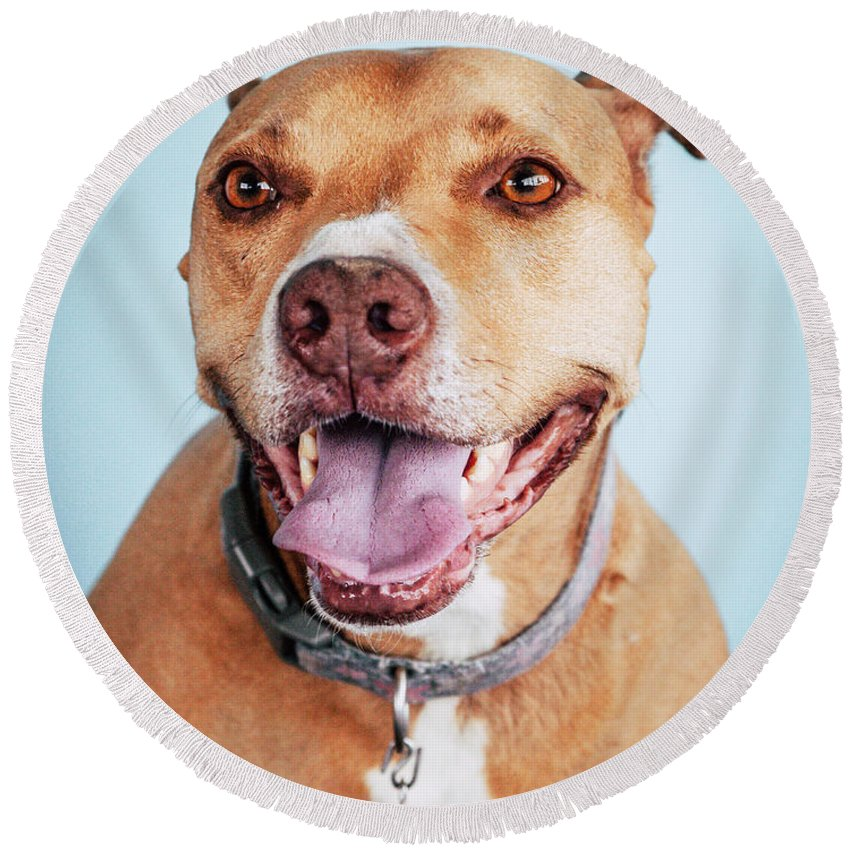 Dog Round Beach Towel featuring the photograph Mishka 5 by Pit Bull Headshots by Headshots Melrose