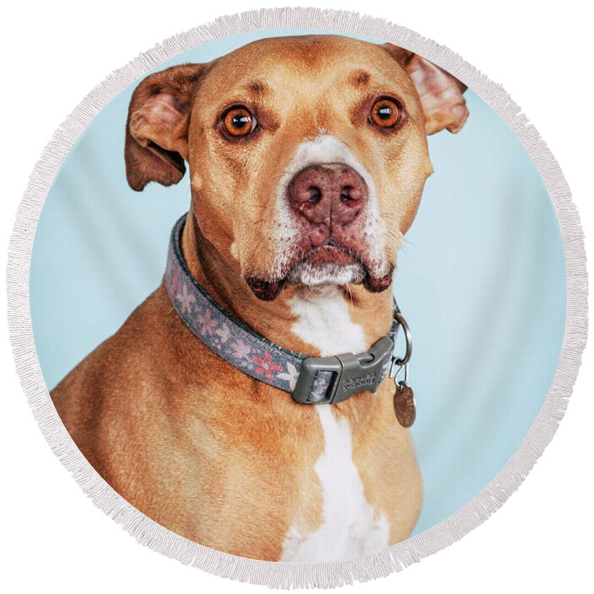 Dog Round Beach Towel featuring the photograph Mishka1 by Pit Bull Headshots by Headshots Melrose