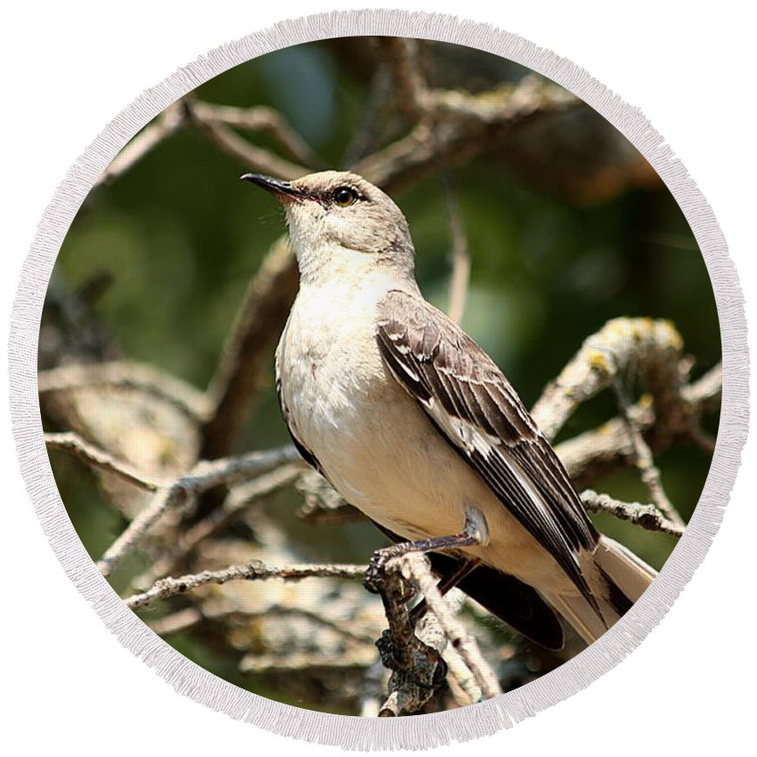 Nature Round Beach Towel featuring the photograph Mockingbird by Sheila Brown