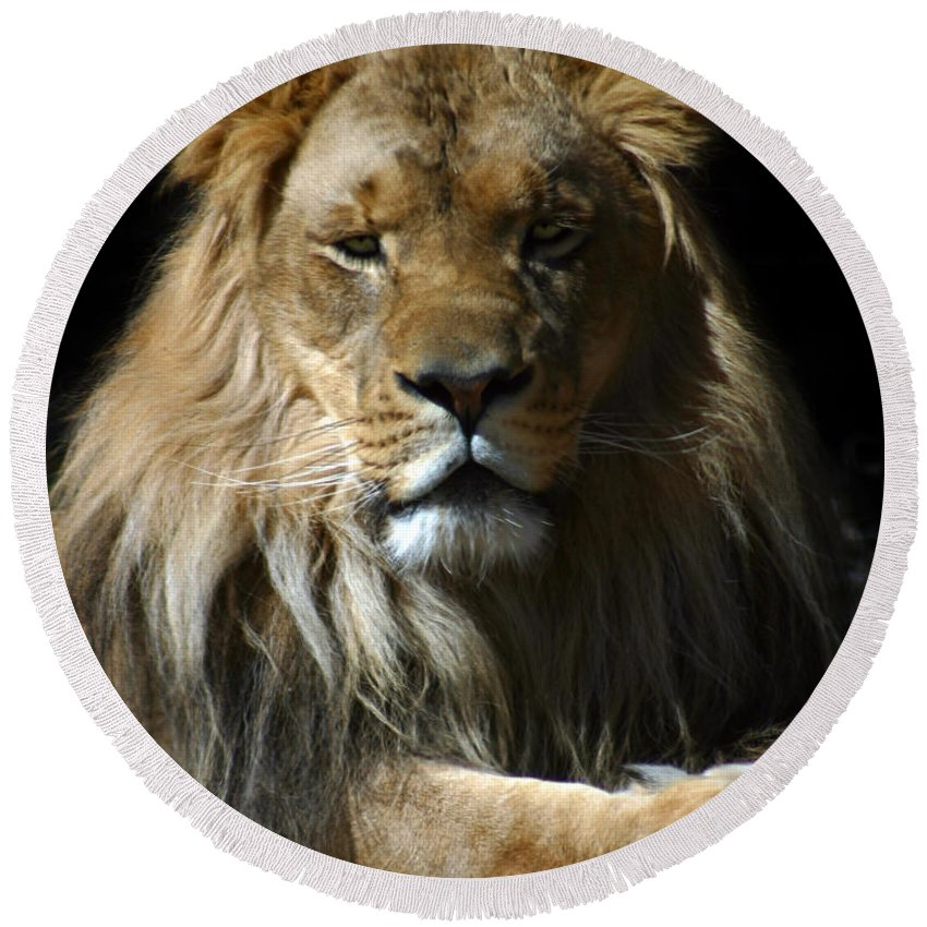 Lion Round Beach Towel featuring the photograph Mohawk by Anthony Jones