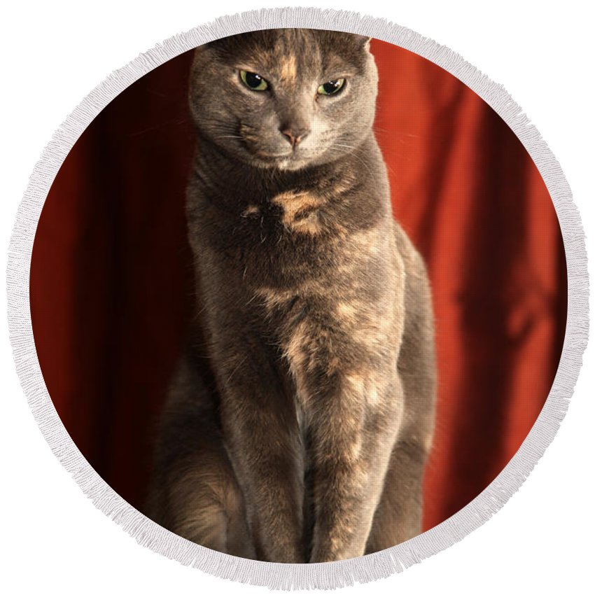 Cat Round Beach Towel featuring the photograph Mollie by Amanda Barcon