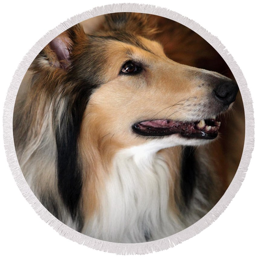 Collie Round Beach Towel featuring the photograph Molly by Amanda Barcon
