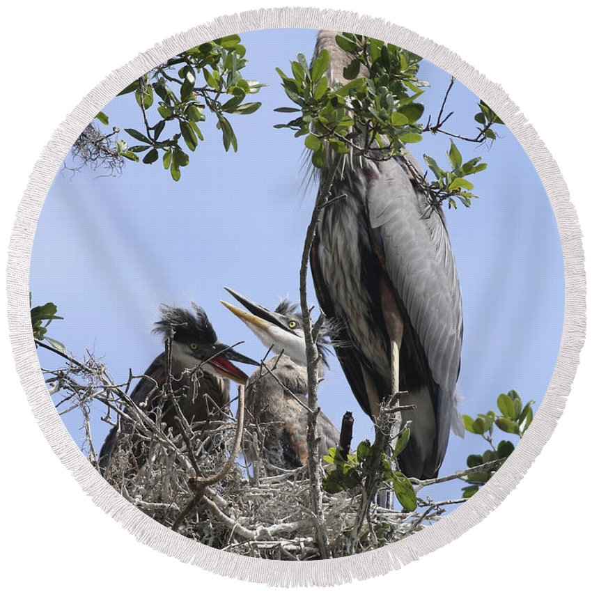 Blue Heron Round Beach Towel featuring the photograph Mom And Babies by Deborah Benoit