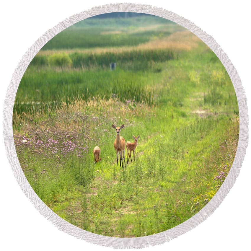 Whitetail Deer Round Beach Towel featuring the photograph Mom And The Twins by Linda Kerkau