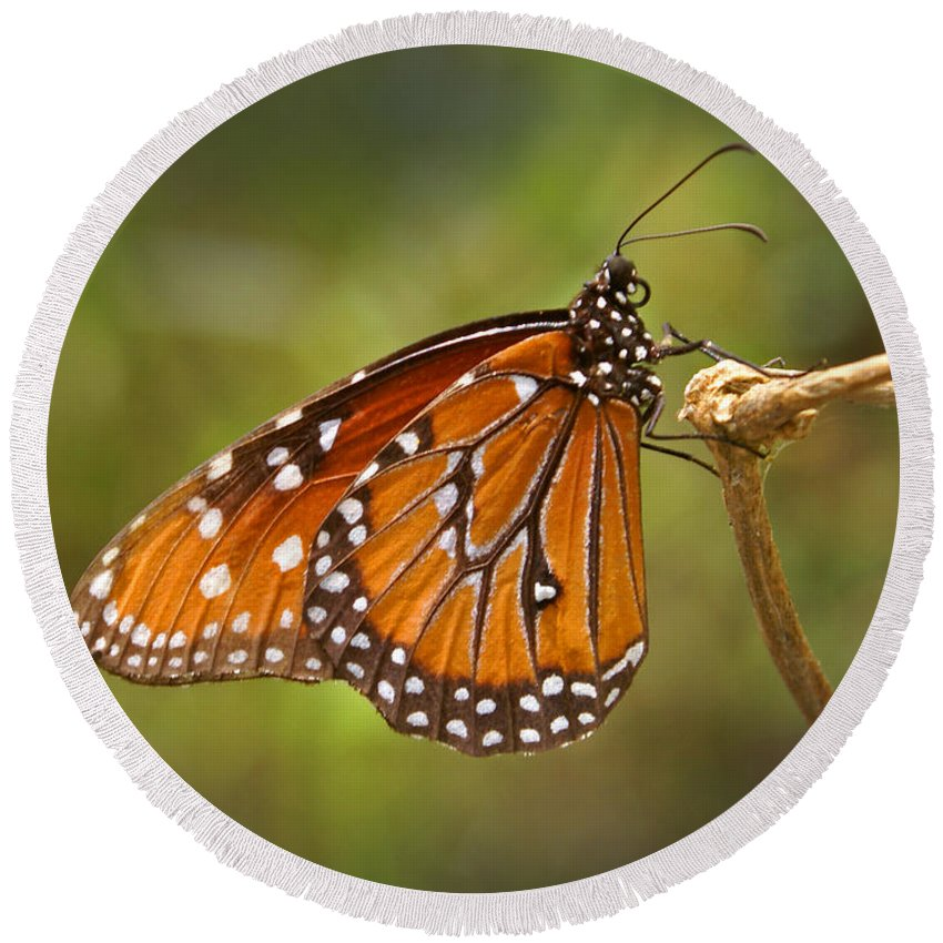 Monarch Round Beach Towel featuring the photograph Monarch Butterfly by Heather Coen